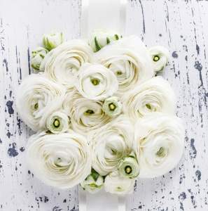 White ranunculus flowers on white wooden background.